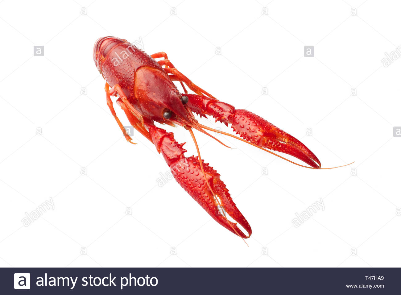 Boiled red crawfish isolated on white background Stock Photo 1300x956
