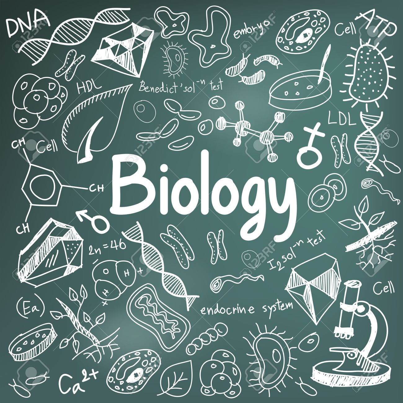 Biology Science Theory Doodle Handwriting And Tool Model Icon 1300x1300