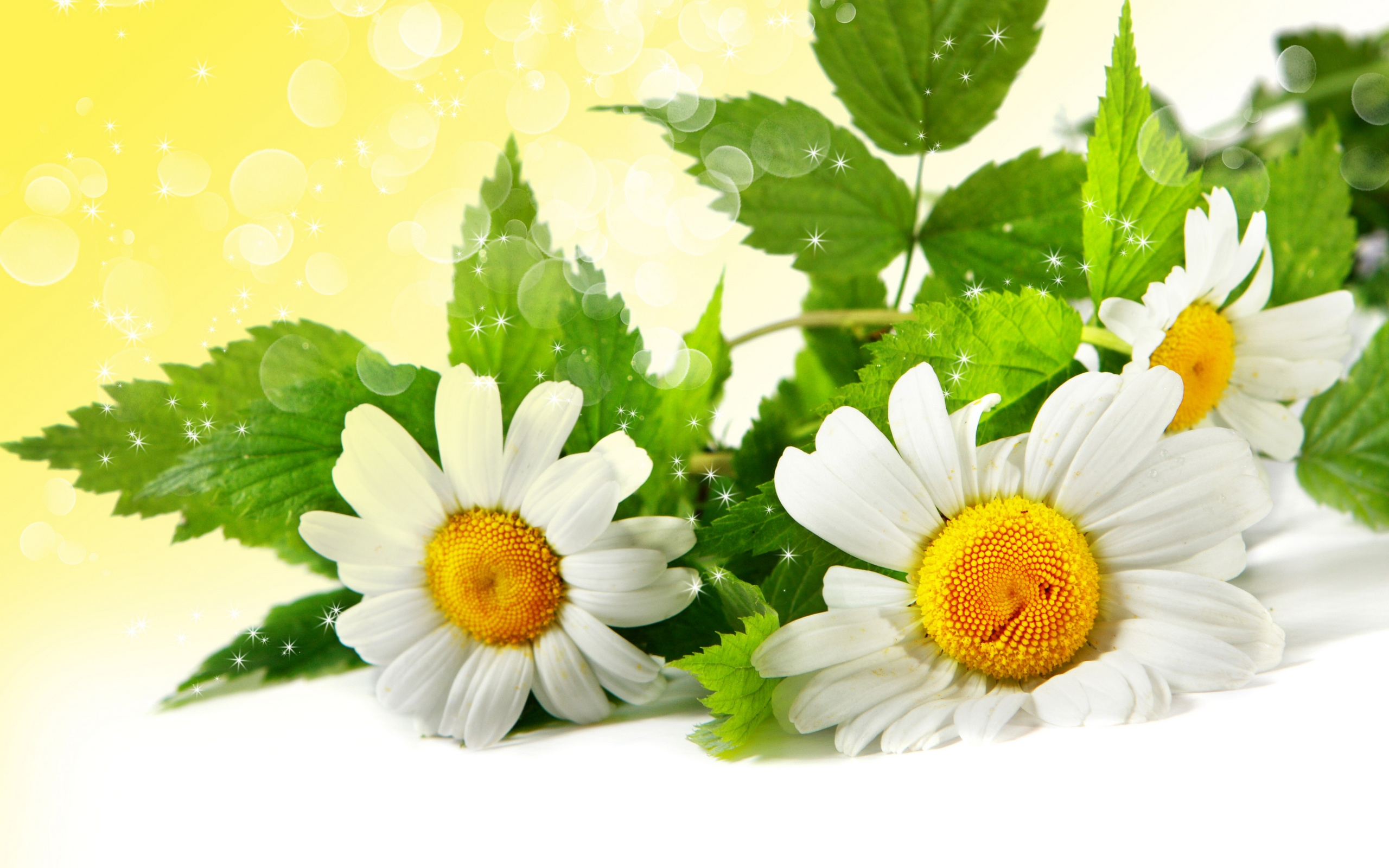 Dream Spring 2012   pretty flowers Wallpapers   HD Wallpapers 96624 2560x1600