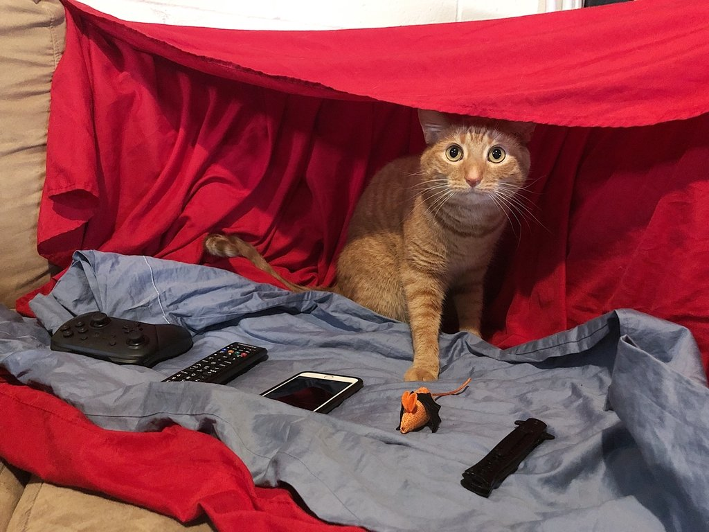 Our cat is obsessed with blanket forts so we made him this He 1024x768