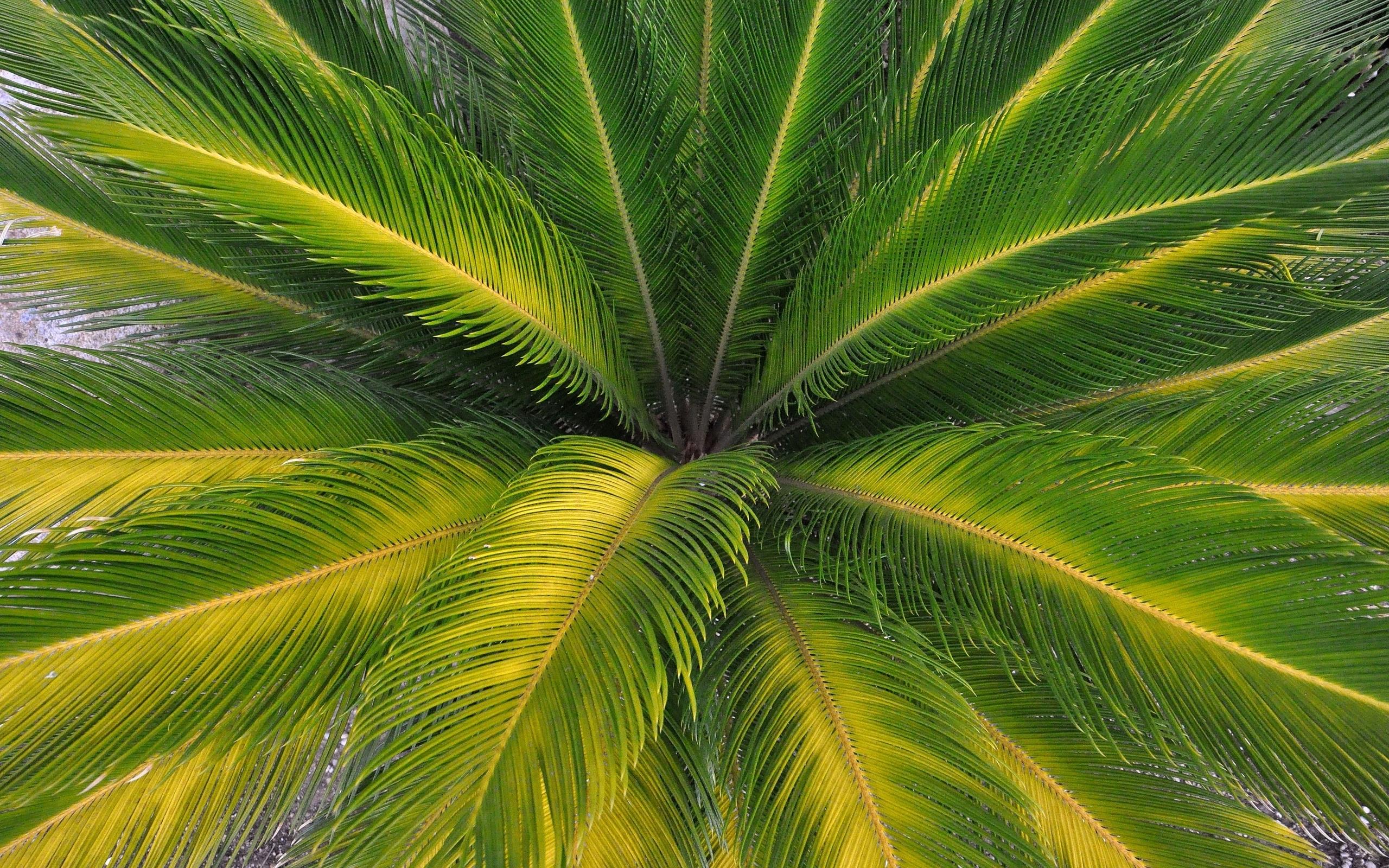 Palm tree wallpaper 29332 2560x1600
