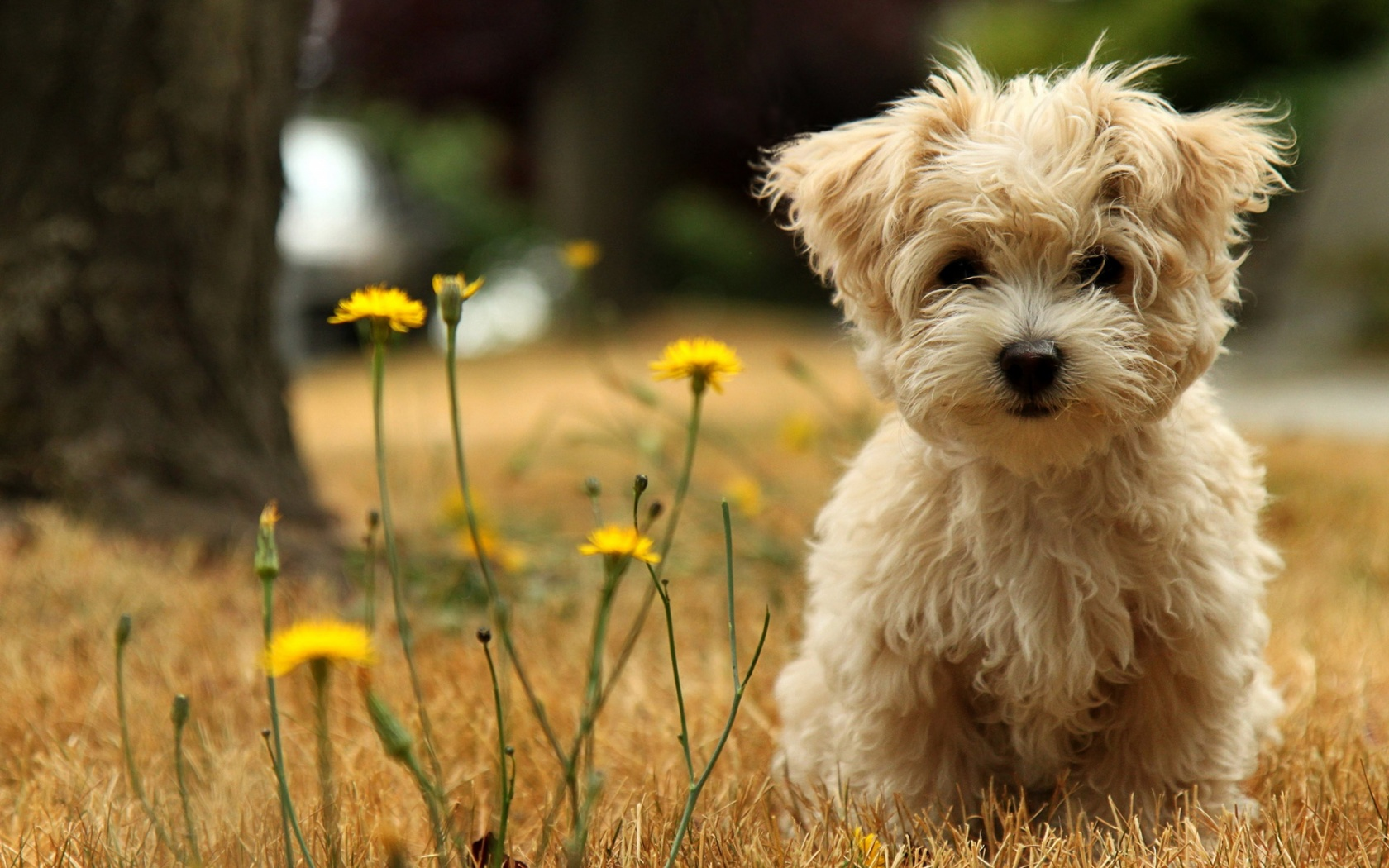 Funny puppy wallpapers and images   wallpapers pictures photos 1680x1050