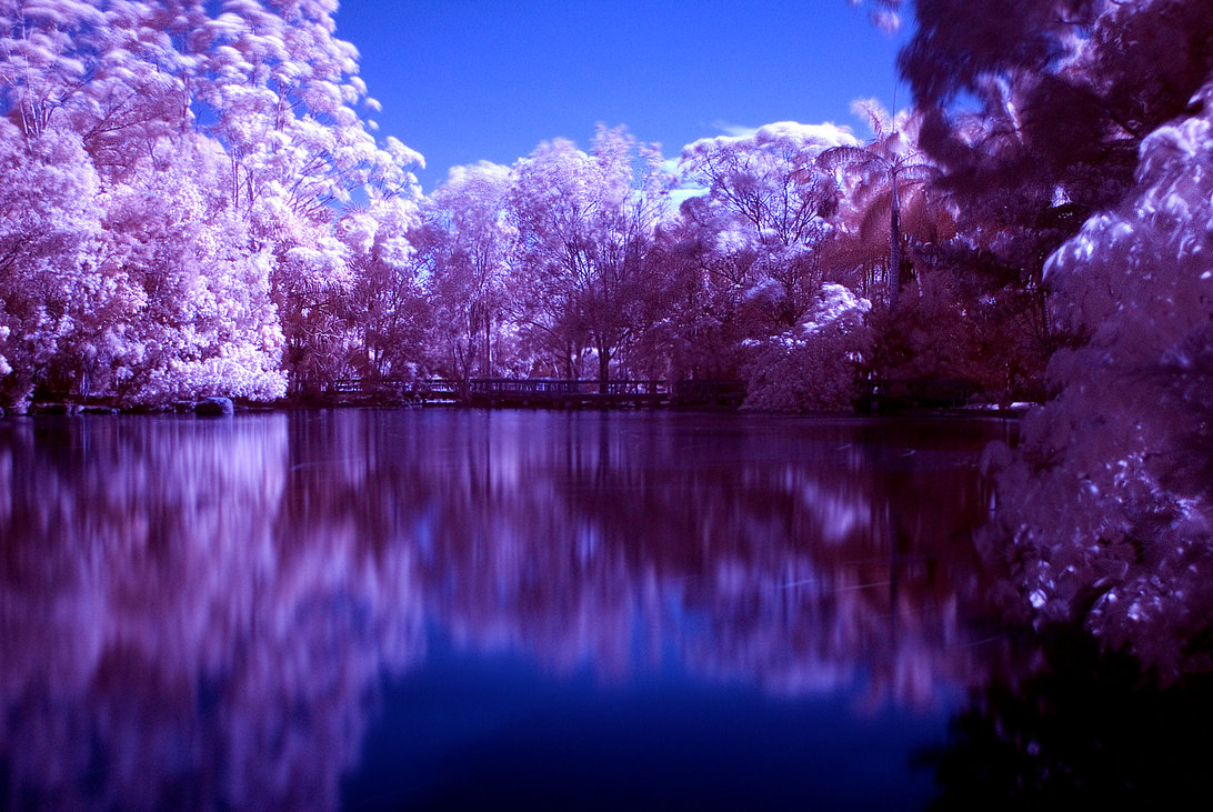 purple landscape nature desktop background lake water tree wallpapers trees lakes wallpapersafari forwallpapercom