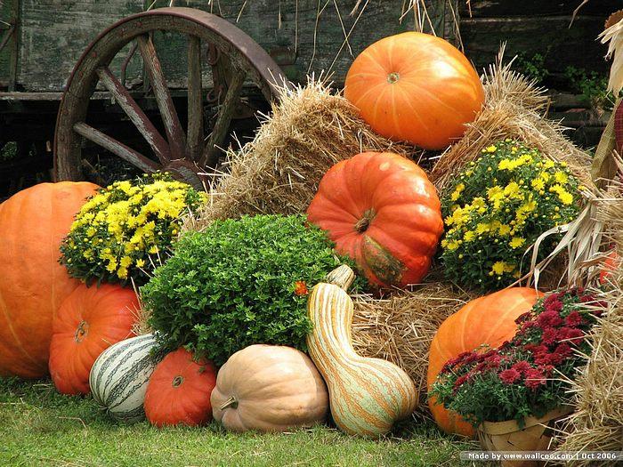 40 pumpkin and fall flower wallpaper on wallpapersafari - Pumpkin wallpaper fall ...
