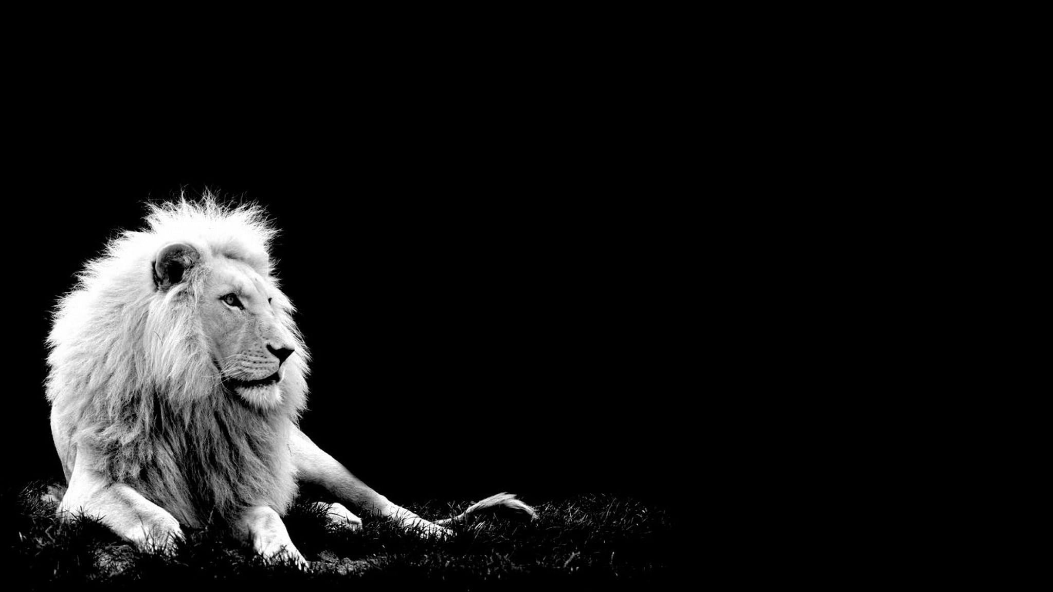 Lions tumblr black and white