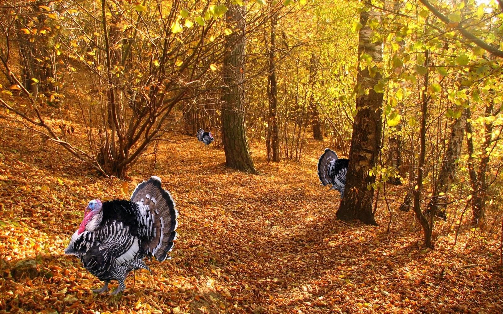 Thanksgiving Wallpaper for Thanksgiving 2011 PPT Bird I Saw 1600x1000