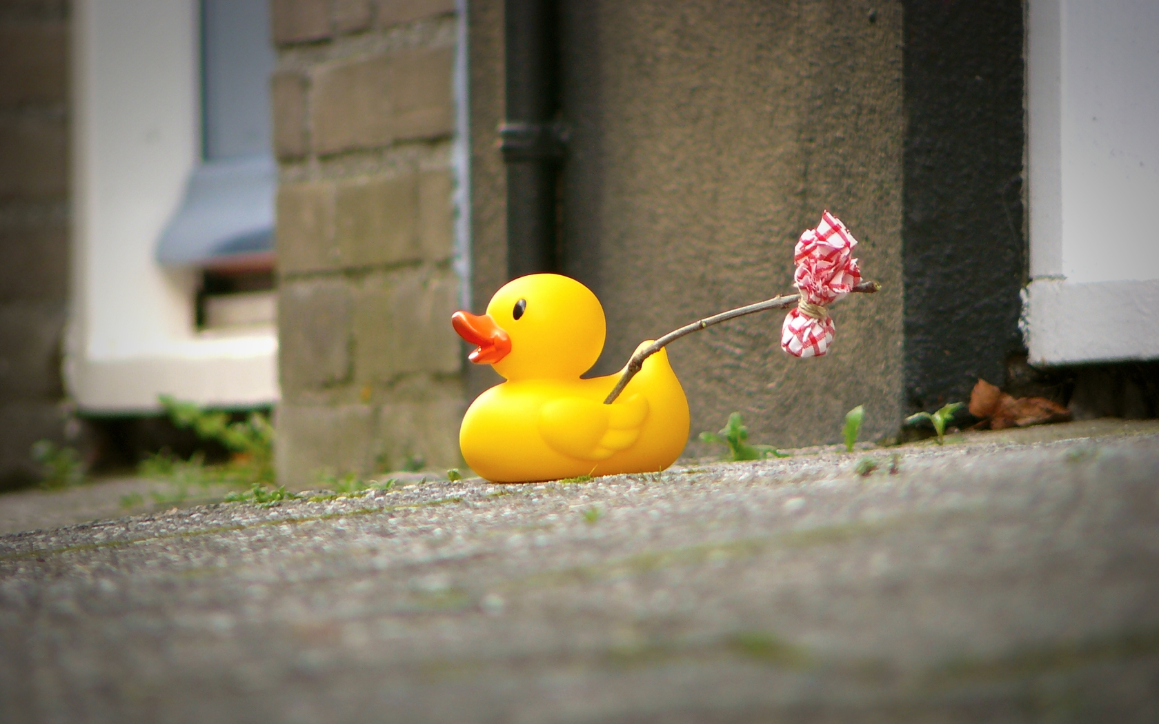 48 Rubber Duck Wallpaper On Wallpapersafari