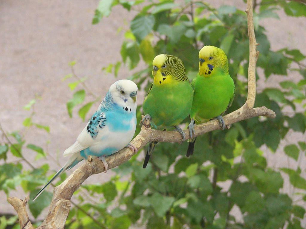 SUN SHINES colourful birds wallpaper 1024x768