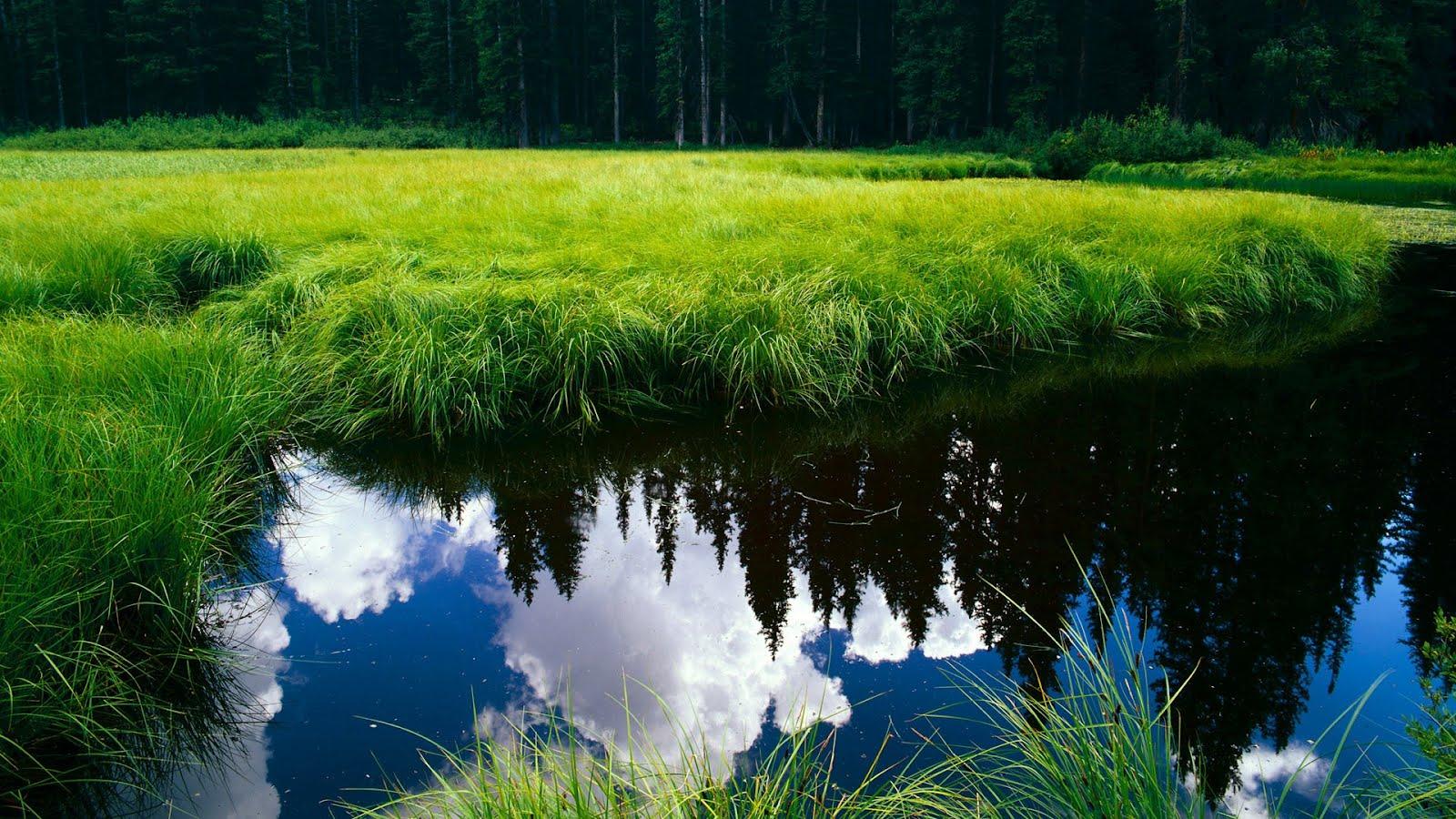 Download Nature Wallpapers Full HD 1080p Photo Desktop Backgrounds 1600x900