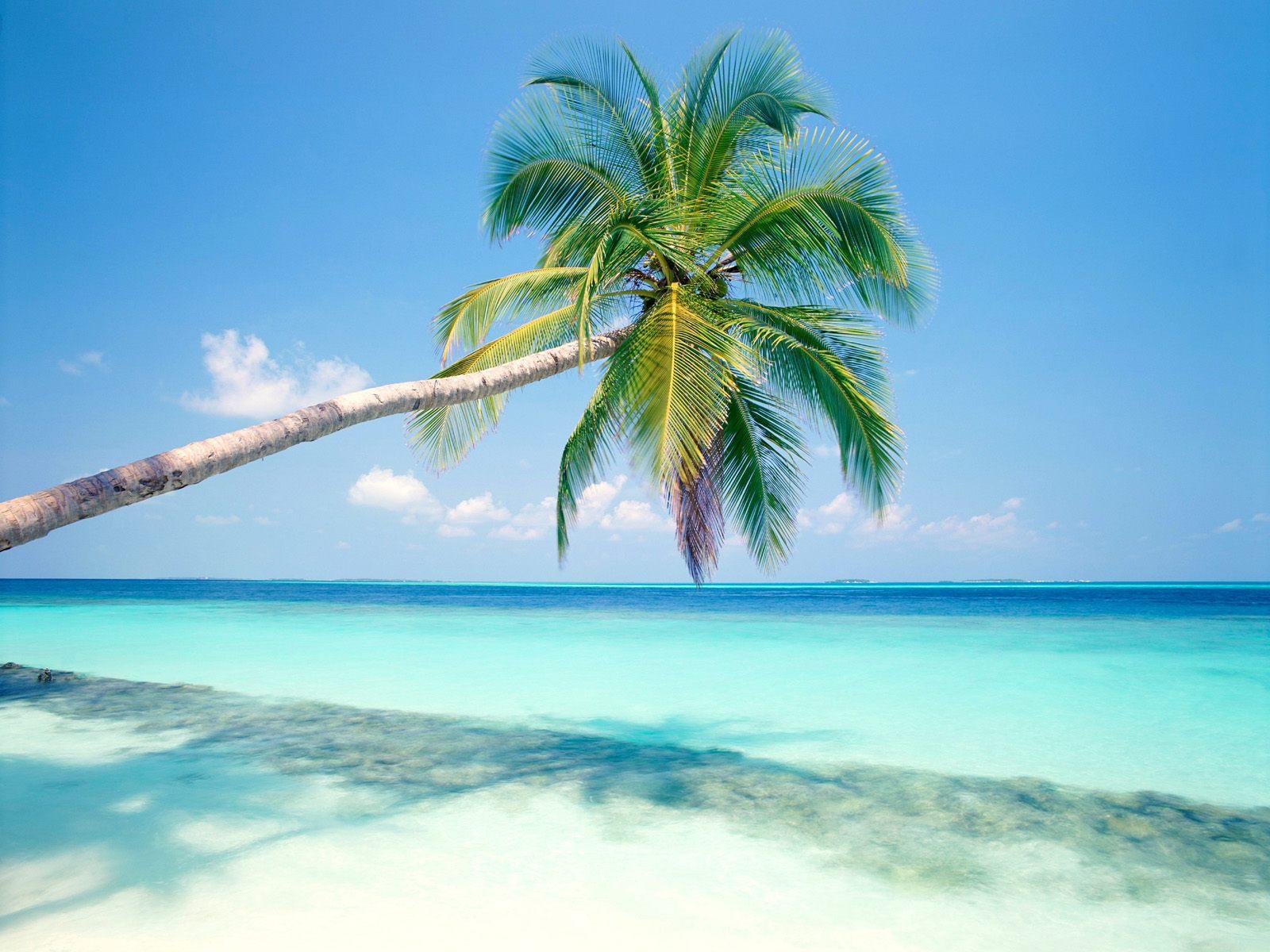 free wallpaper of Tropical Island blue sea and pretty coconut tree 1600x1200