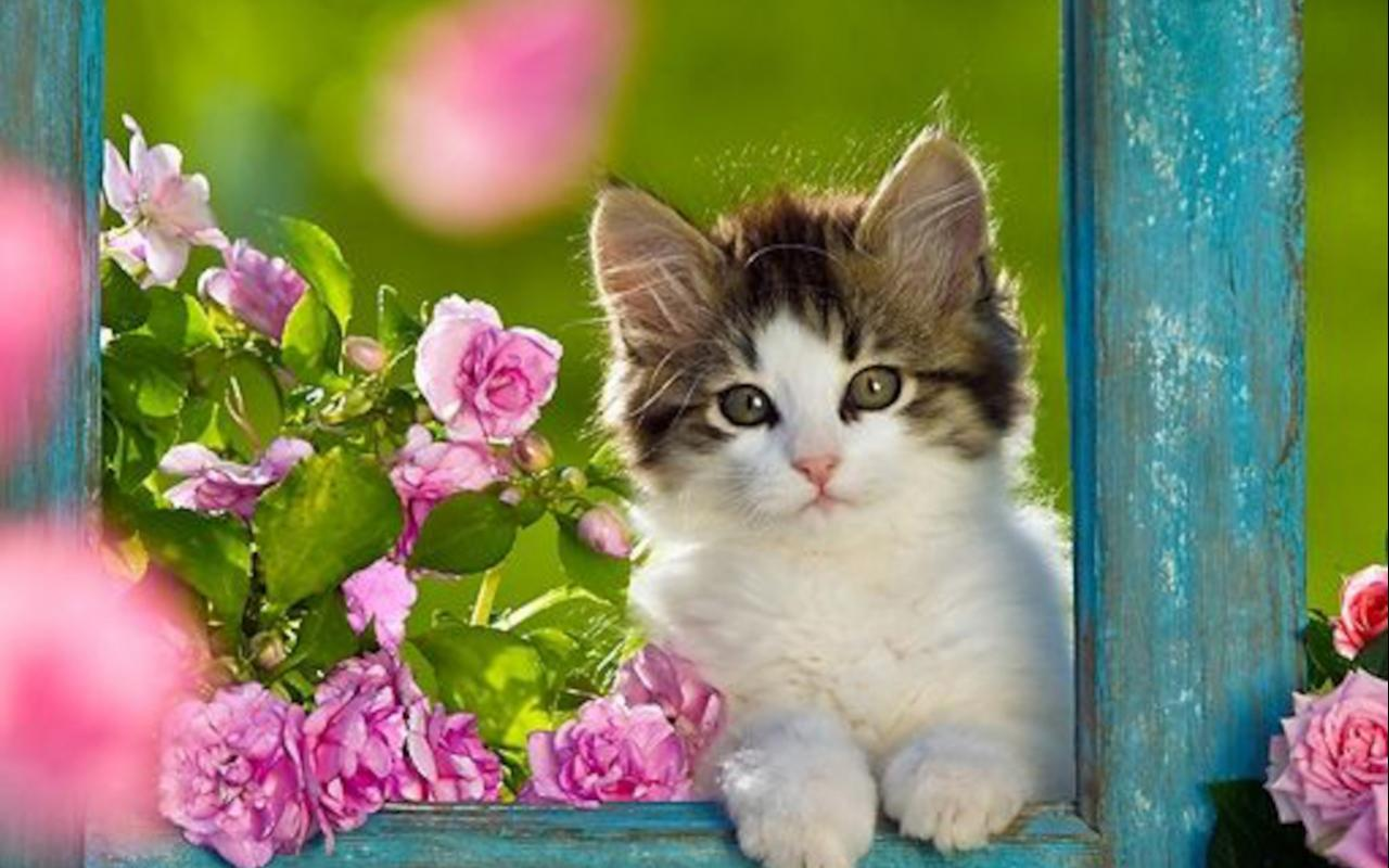 Best Cute Kitten Wallpaper No 9 of 10 HD Wallpapers for 1280x800
