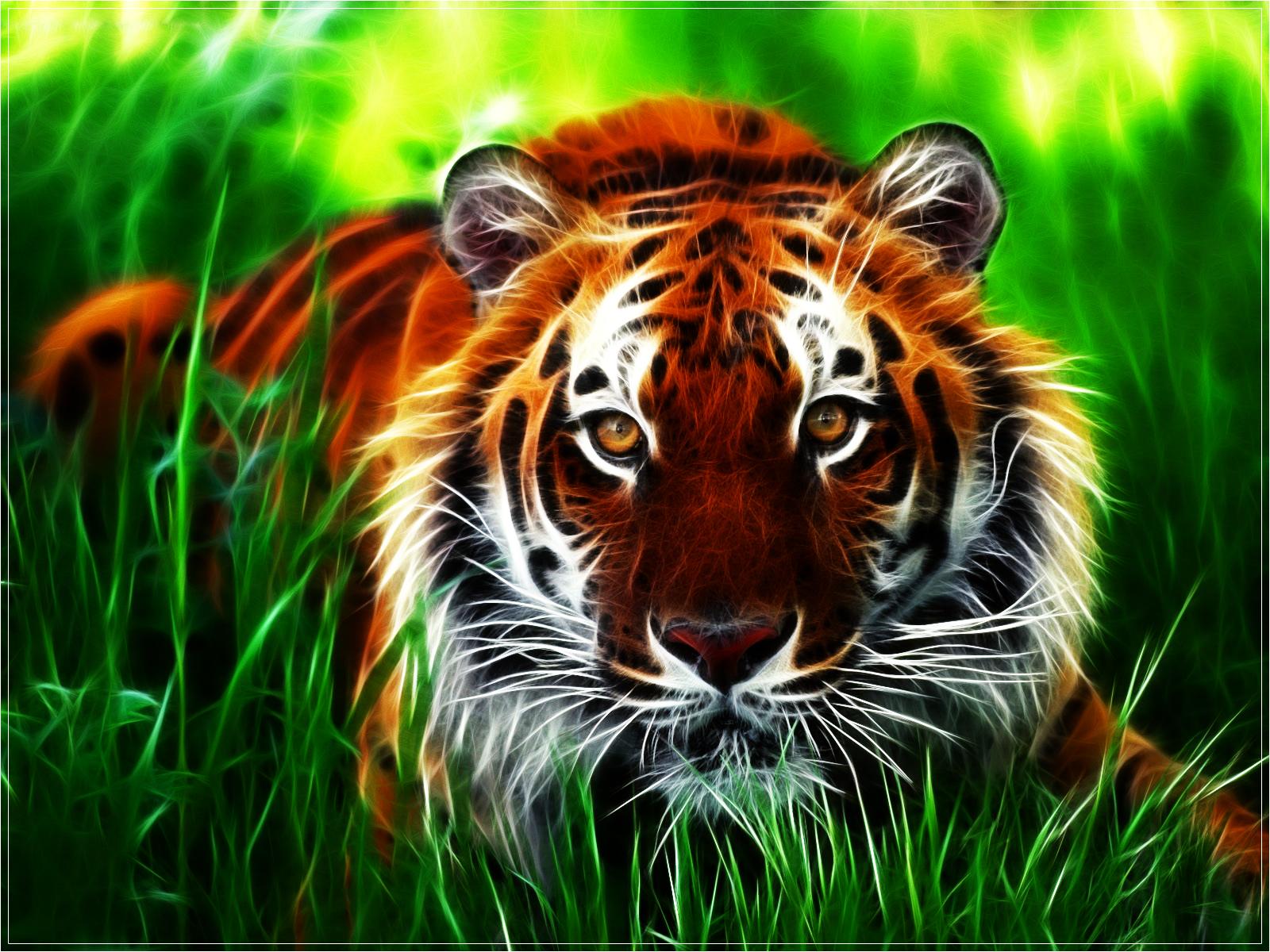 Tiger Desktop Wallpaper Wallpapersafari