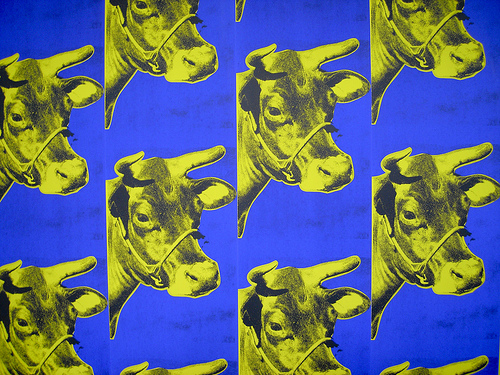 Cow Wallpaper 1966 Flickr   Photo Sharing 500x375