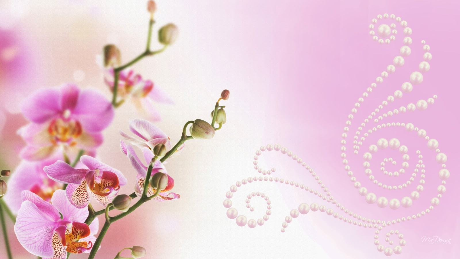 All new wallpaper Attractive pink orchids wallpaper 1600x900