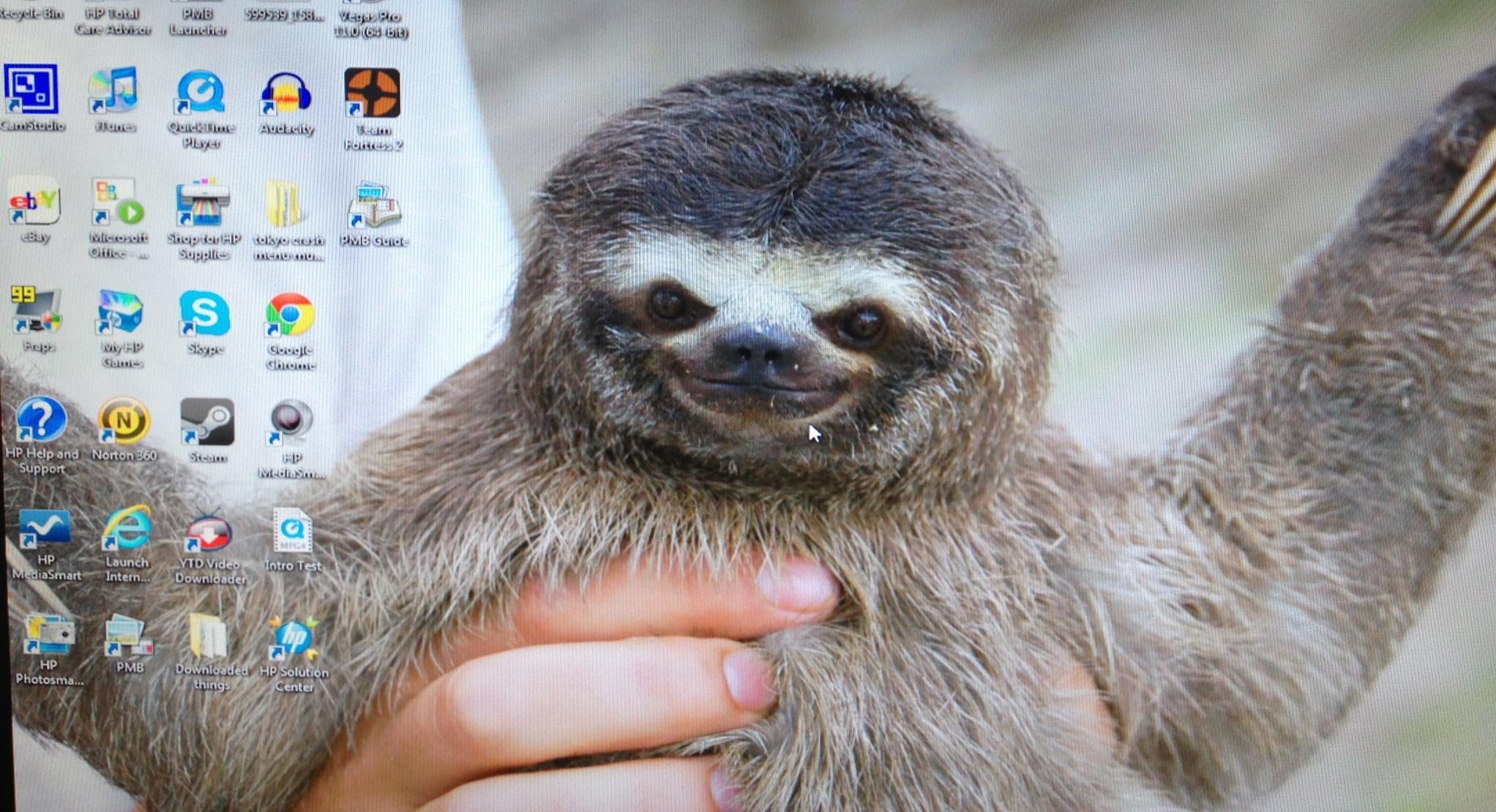 sloth desktop wallpaper wallpapersafari