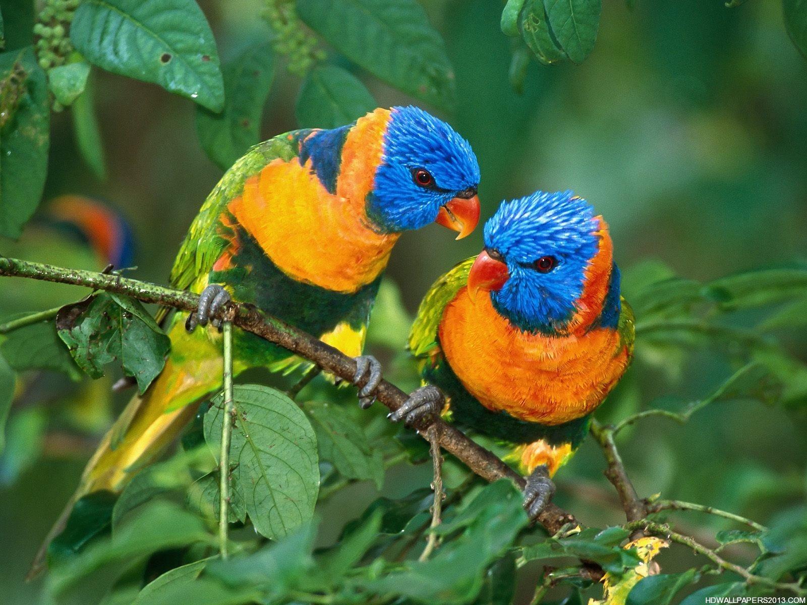 48 Birds Wallpaper Free Download On Wallpapersafari