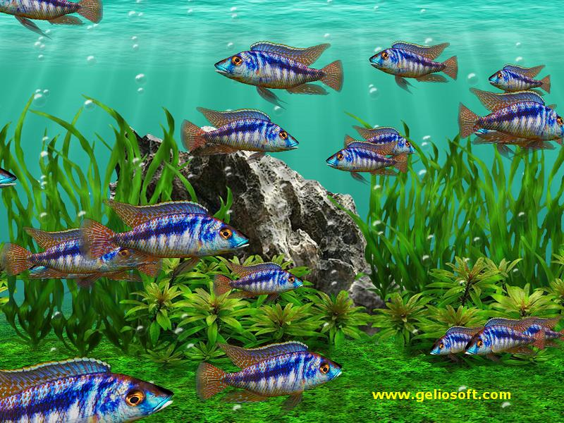 Free fishing screensavers and wallpaper wallpapersafari for Moving fish screensaver