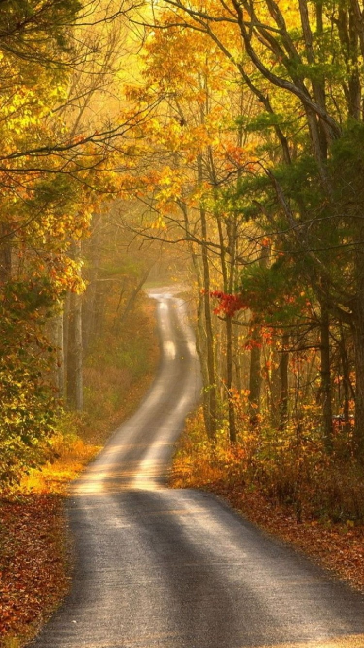 autumn path hd wallpapers for your iphone 6 iphone 6 plus and iphone 5 750x1334