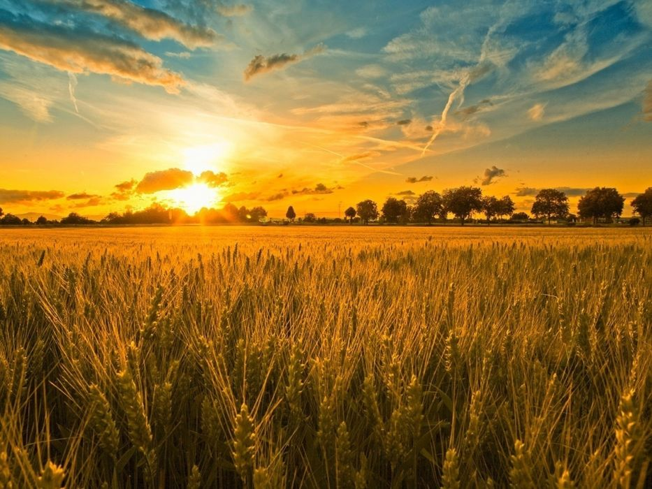 Sunset over a field of rye wallpaper 1600x1200 1093788 933x700
