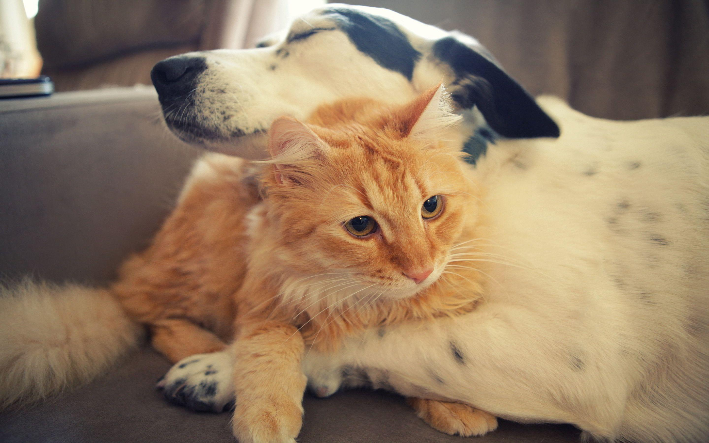 Cats And Dogs Wallpapers 2880x1800