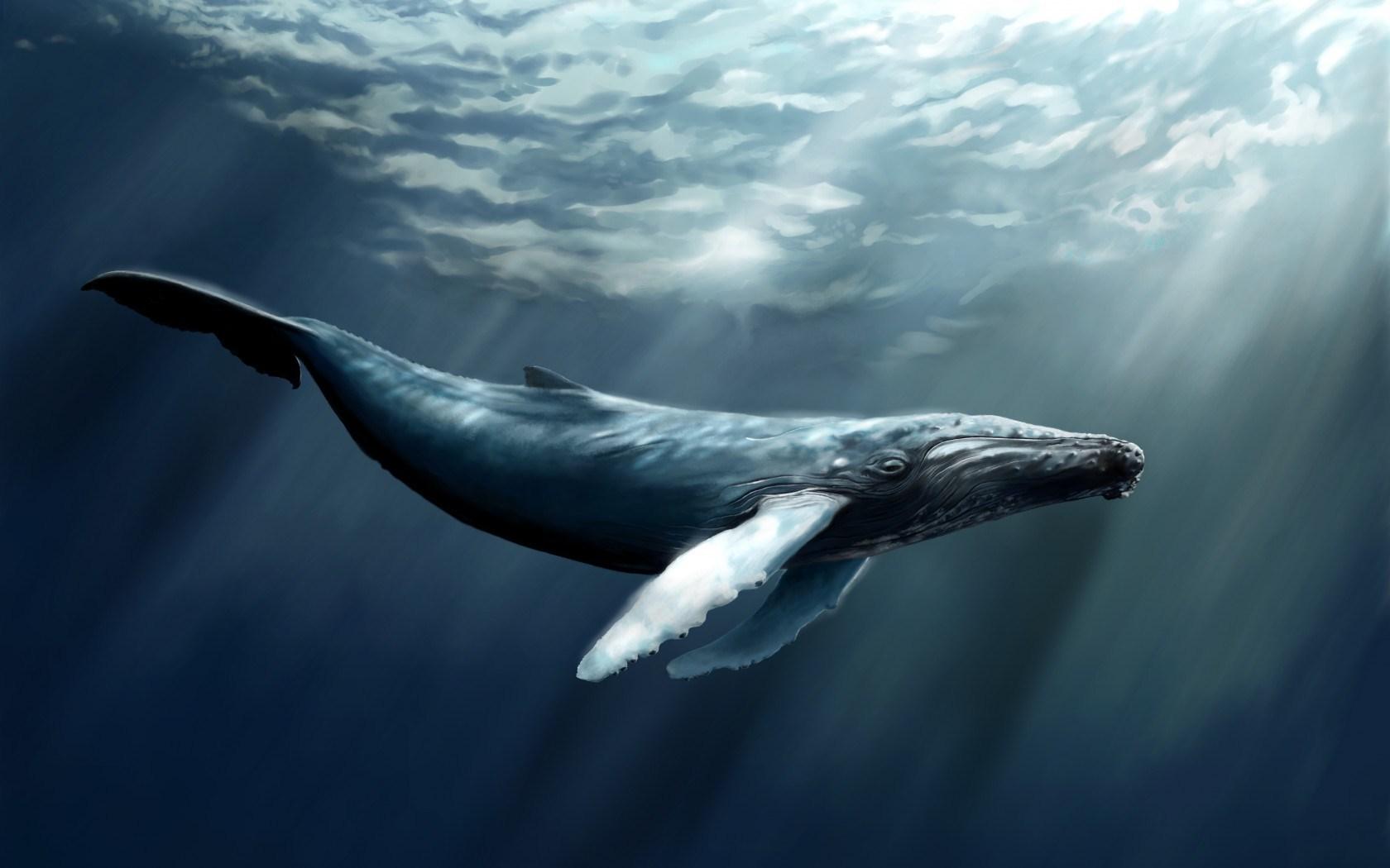 Water Whale Art 1680x1050