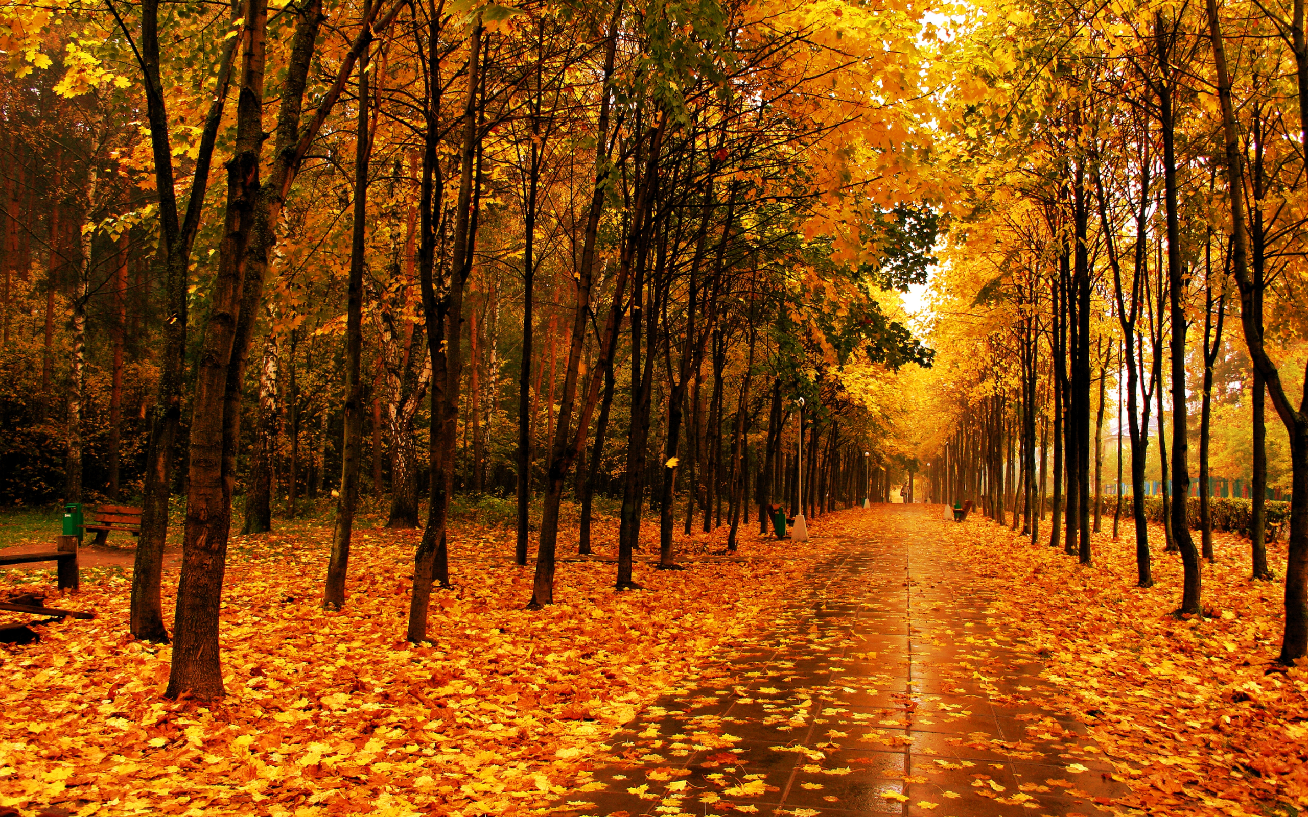 Fall Trees Screensavers wallpaper wallpaper hd background desktop 2560x1600