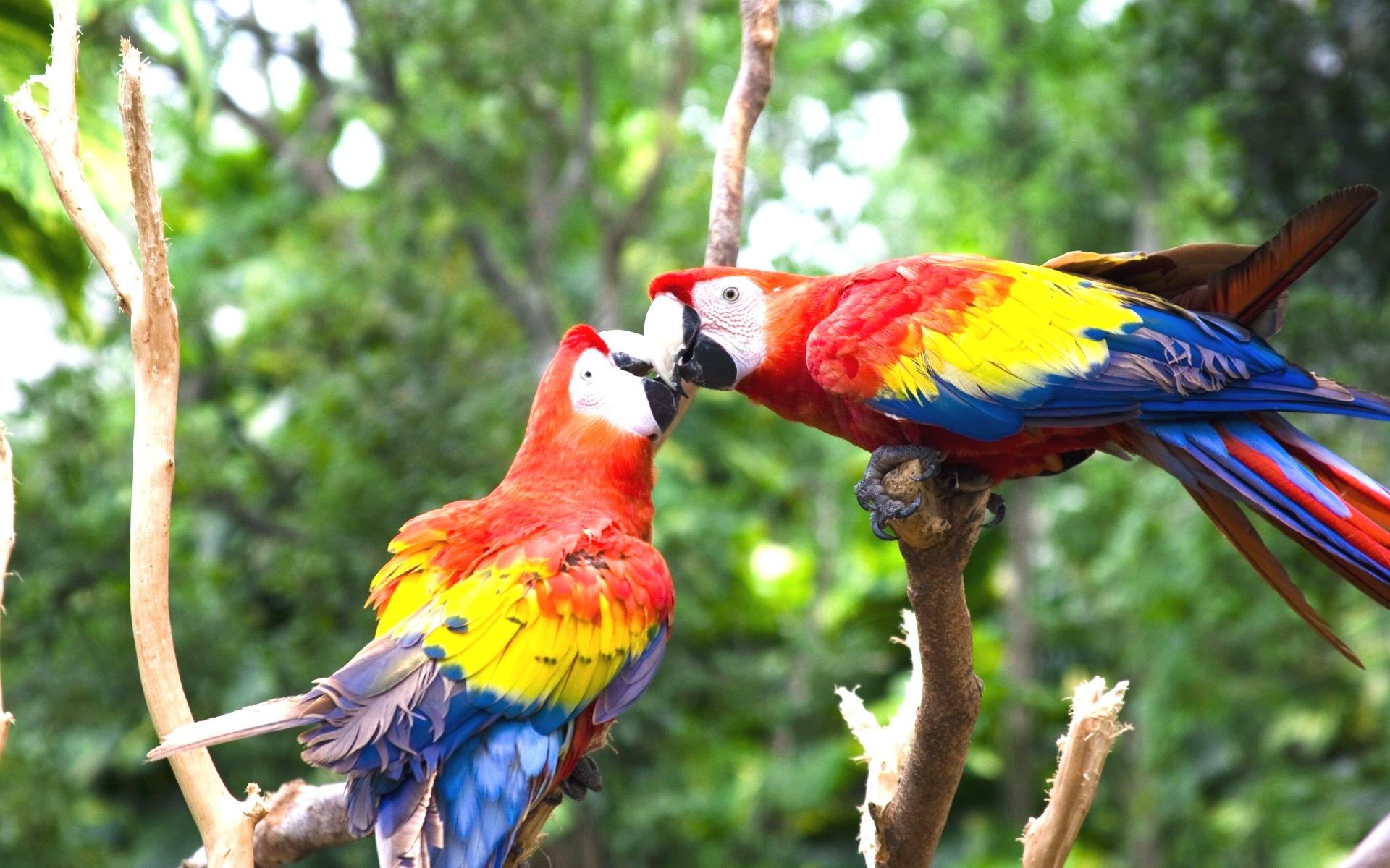 Value Love Bird Images Colorful Parrot Birds Photos 1920x1200