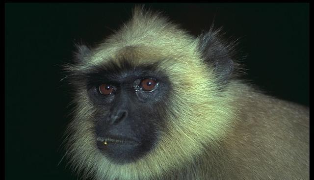 Torrent Curse Of Monkey Island Download Softwares Lisisoft 640x367