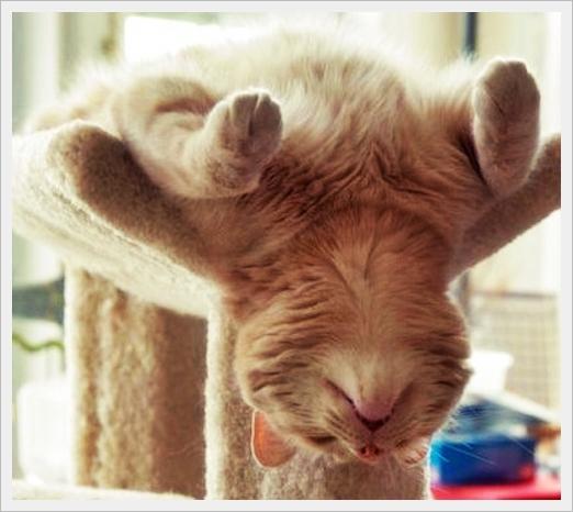 twenty2december The 10 Most Awkward Cat Sleeping Positions 522x466