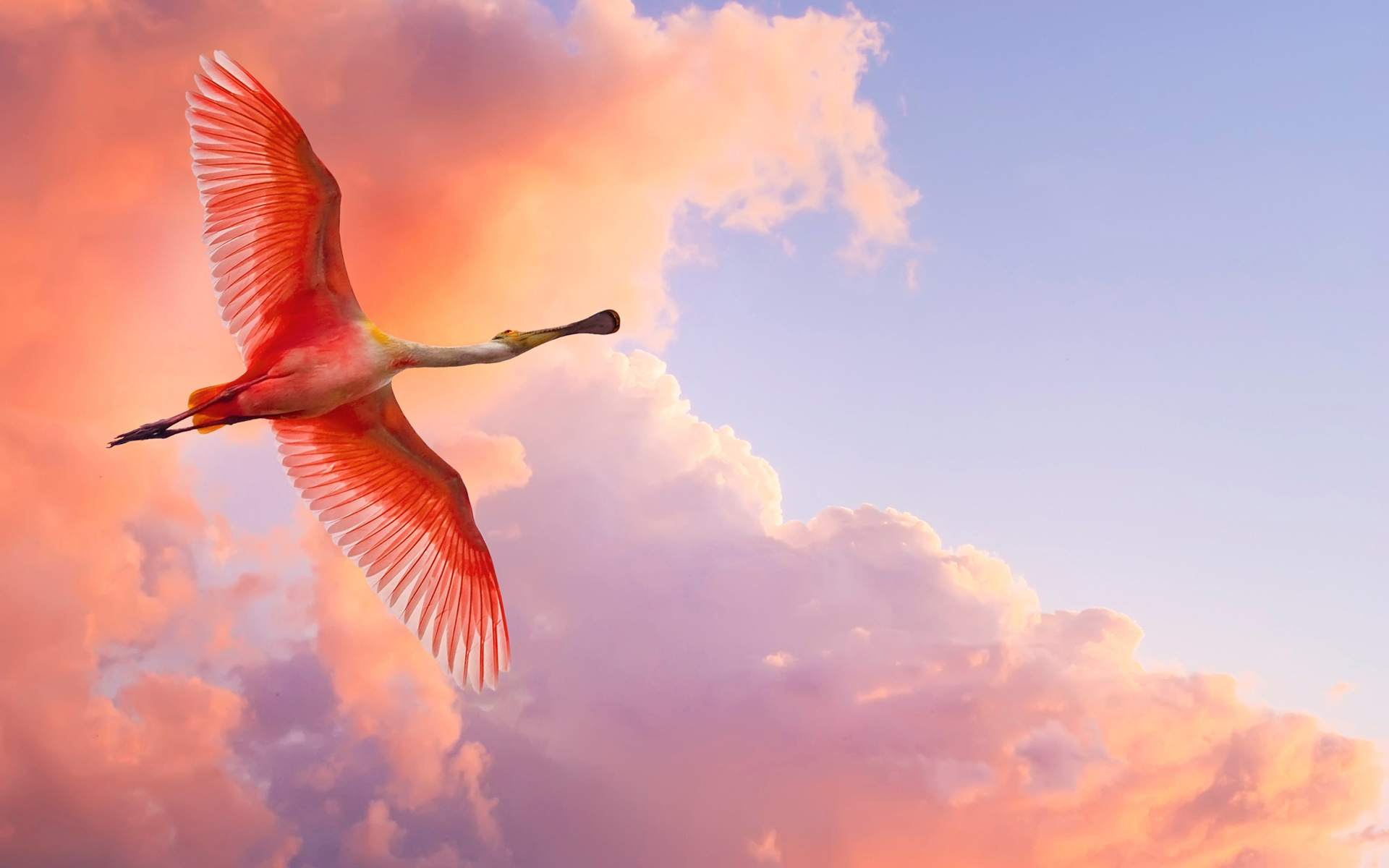 Download Nature Wallpaper wallpaper Pink Bird 1920x1200