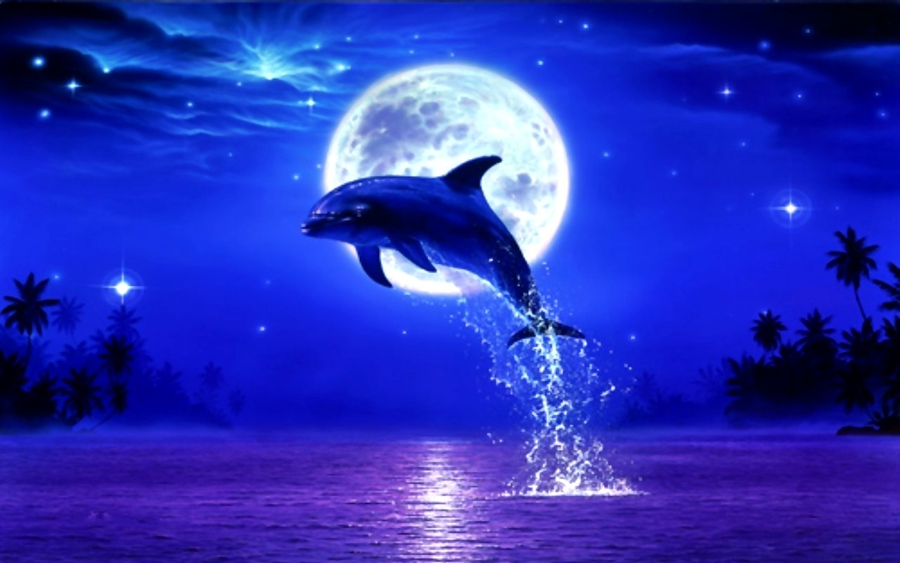 Download Dolphin Moon Night Stars Moonlight Leap Blue Wallpaper 1280x800