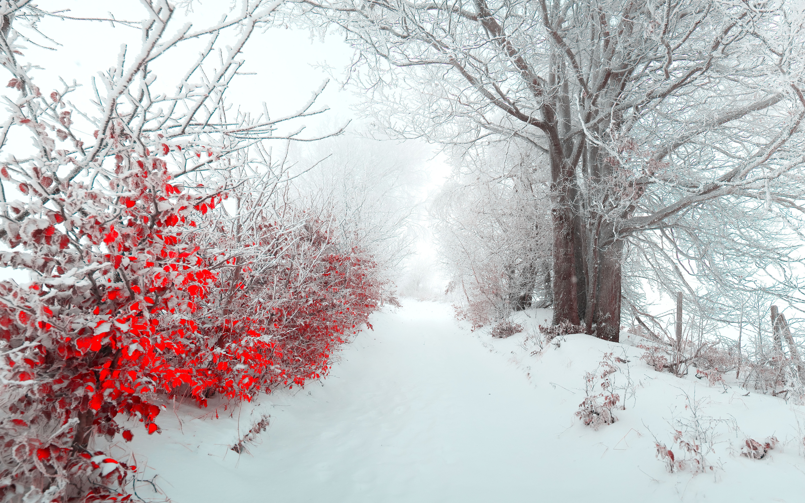tree nature beautiful snow winter christmas f wallpaper background 2560x1600