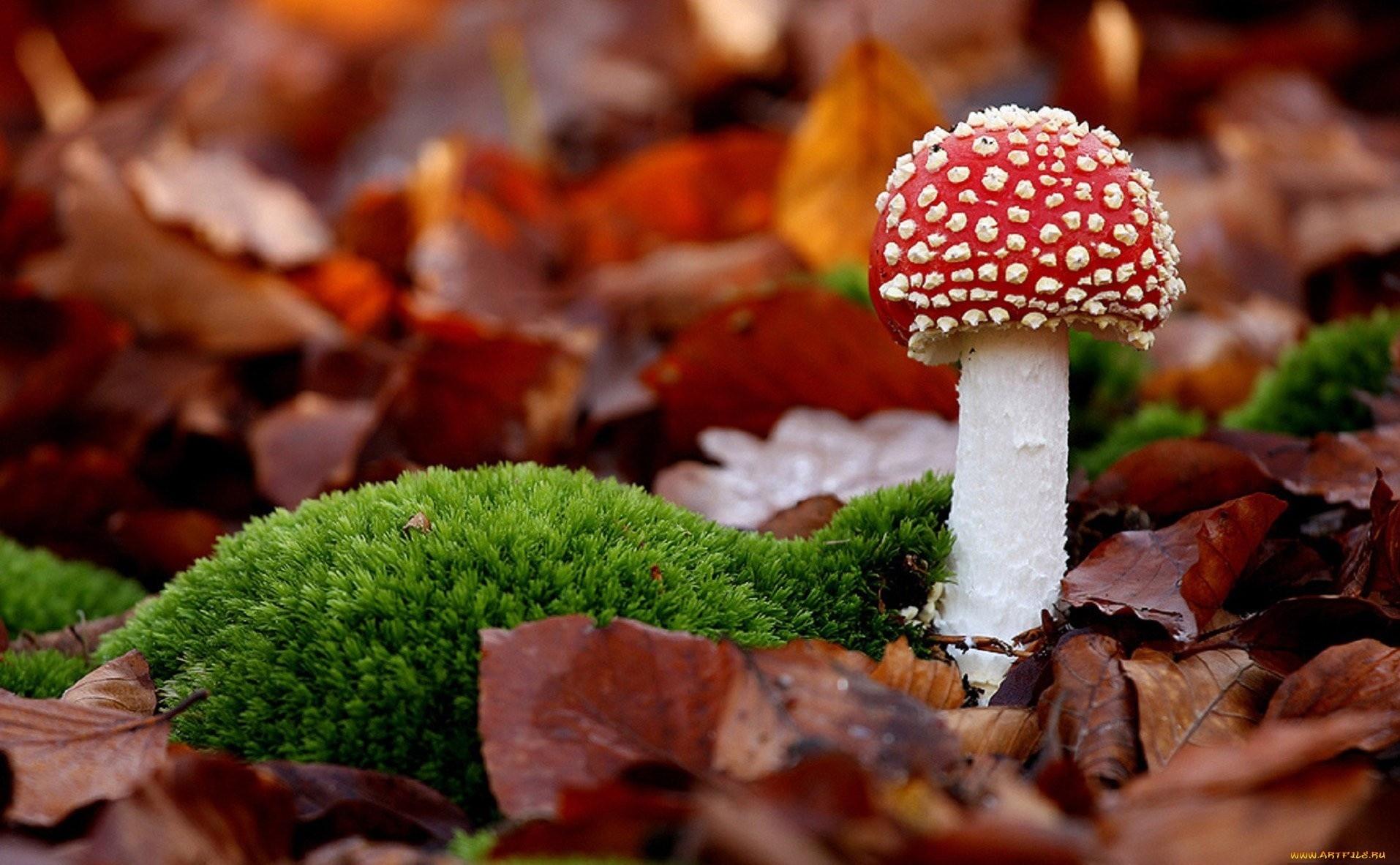 Free Download Mushroom On Wood Wallpaper Pc Wallpaper Wallpaperlepi 1914x1182 For Your Desktop Mobile Tablet Explore 46 Mushrooms Wallpaper Shroom Wallpapers Mario Mushroom Wallpaper Morel Mushroom Wallpaper