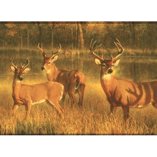 Deer Wallpaper Border Home Improvement 500x500