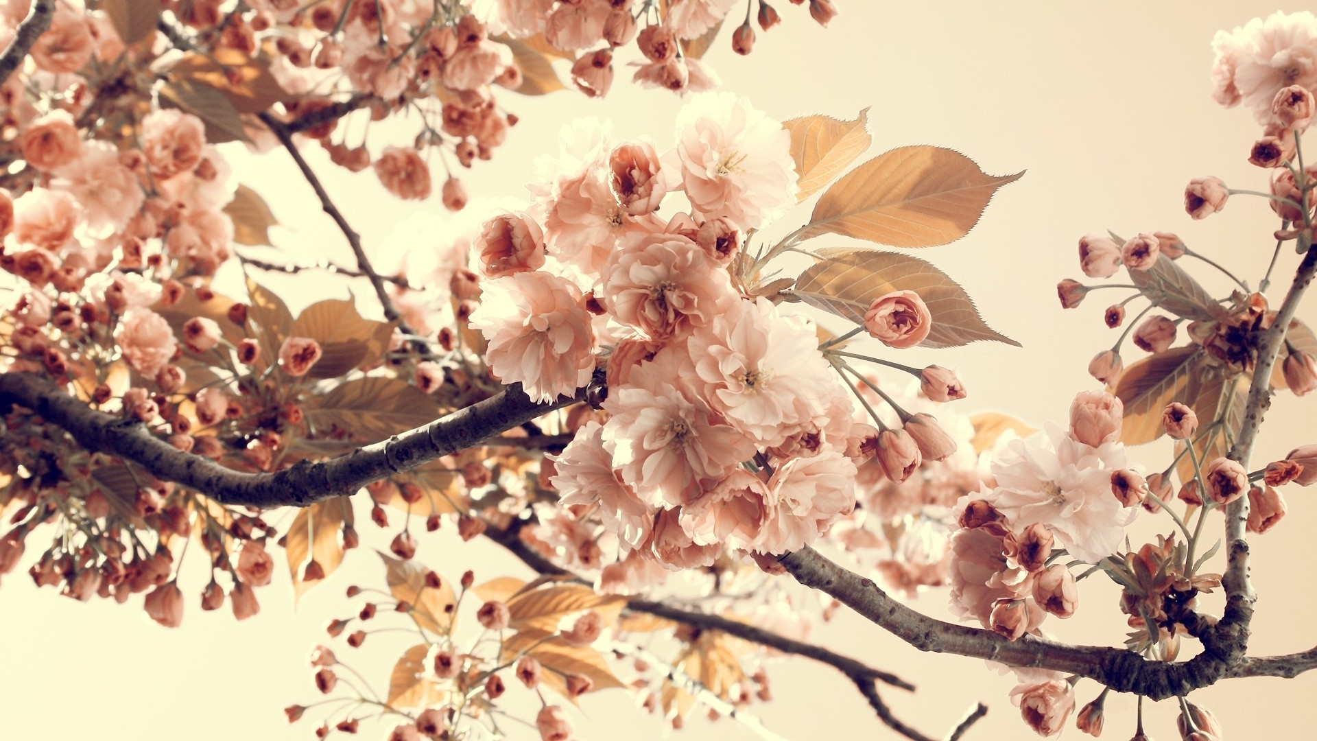 Vintage Flowers Background HD Wallpaper of Vintage   hdwallpaper2013 1920x1080