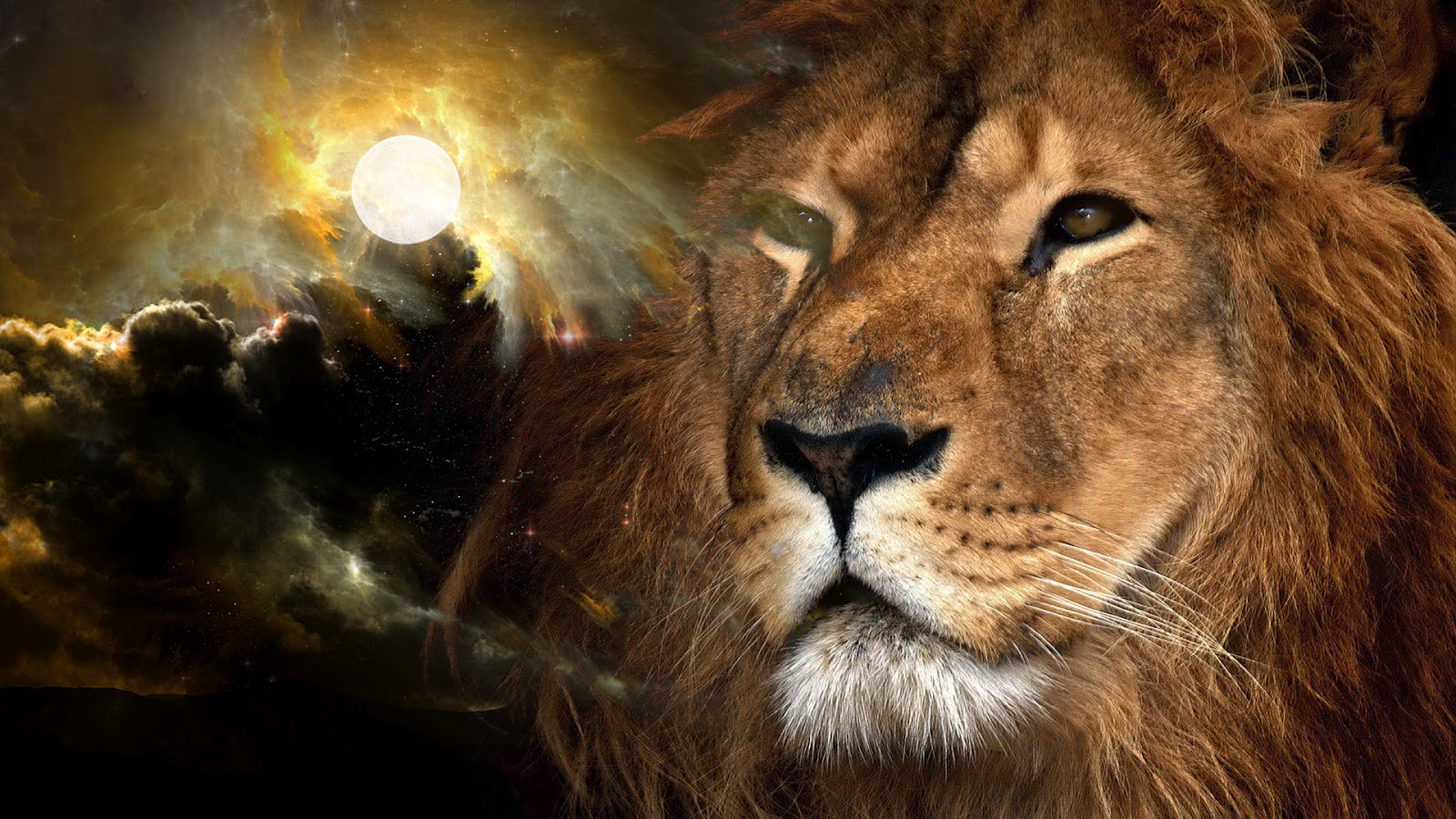 Lions Wallpapers The Sexy Pictures 1600x900