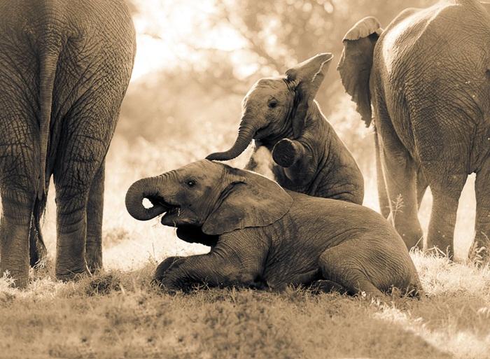 cute baby elephant wallpaper wallpapersafari