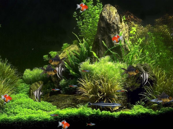 virtual aquarium animated wallpaper desktop wallpapers 270106jpeg 600x448