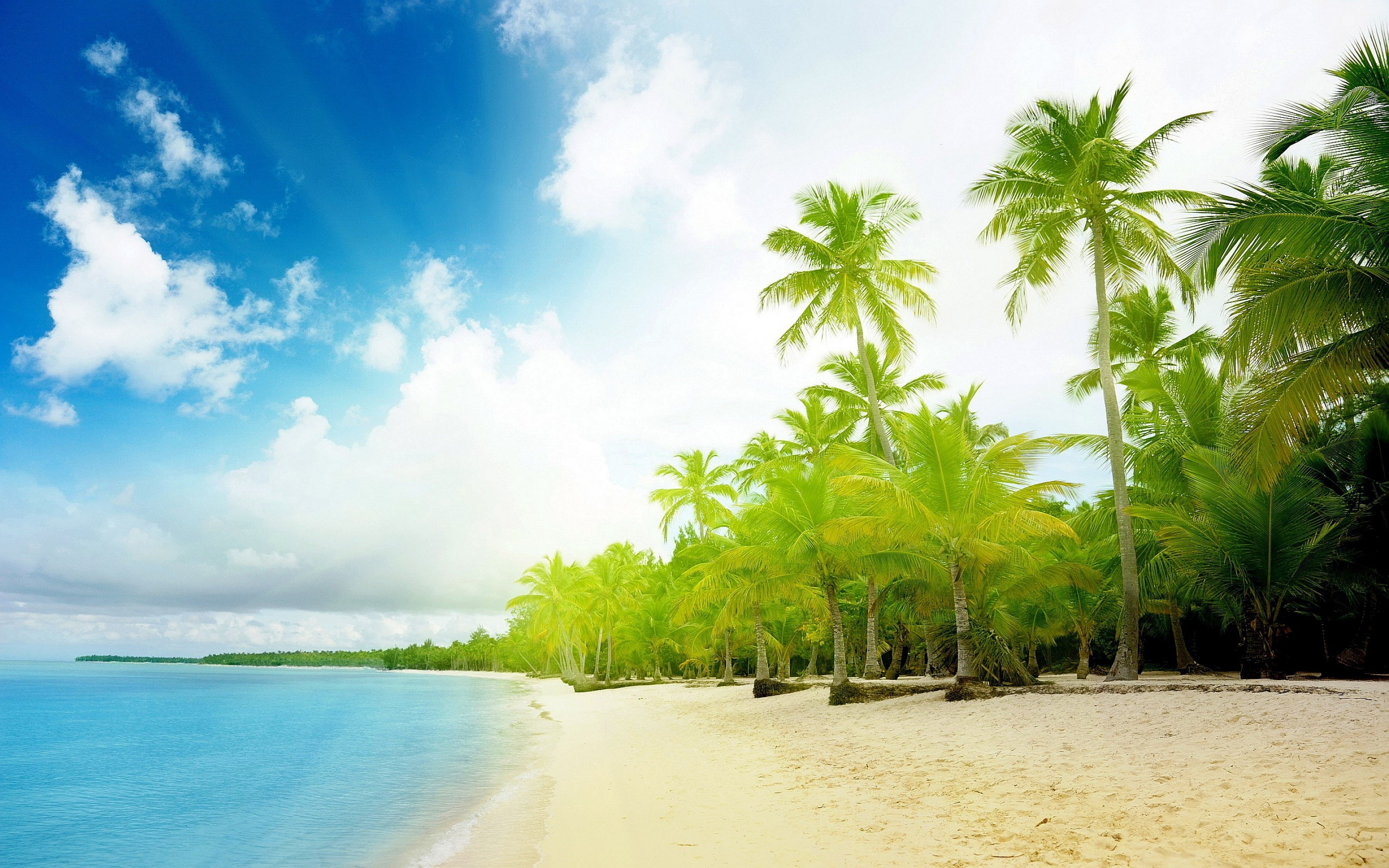 Beach Tropical Palm Trees HD Wallpaper in High Resolution at Nature 2880x1800