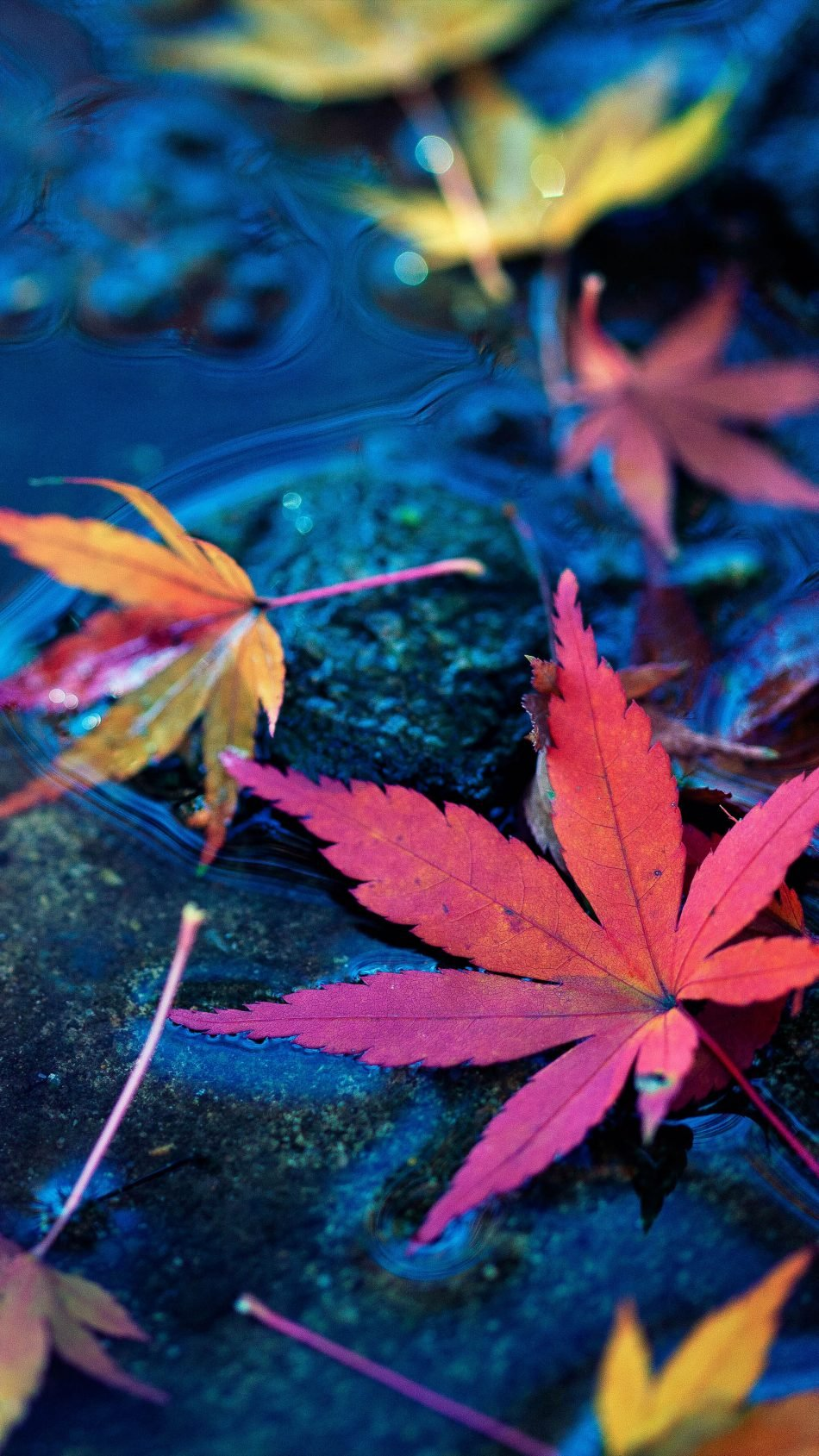 Maple Leaves Fall Autumn Water 4K Ultra HD Mobile Wallpaper 950x1689
