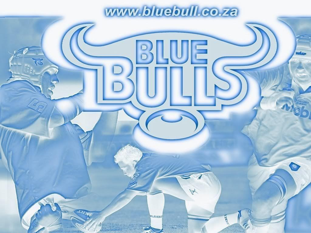 The gallery for   gt Blue Bulls Wallpaper 1024x768