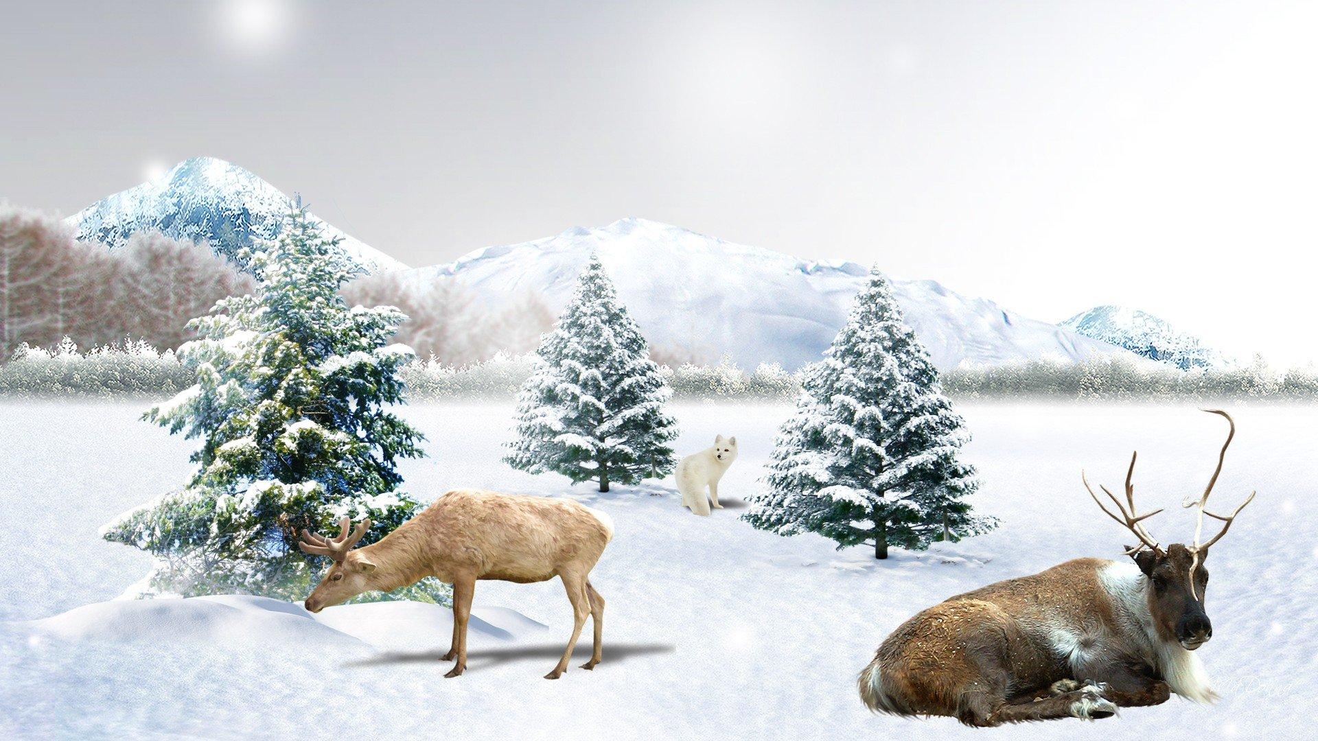 Early Winter Snow wallpaper   ForWallpapercom 1920x1080