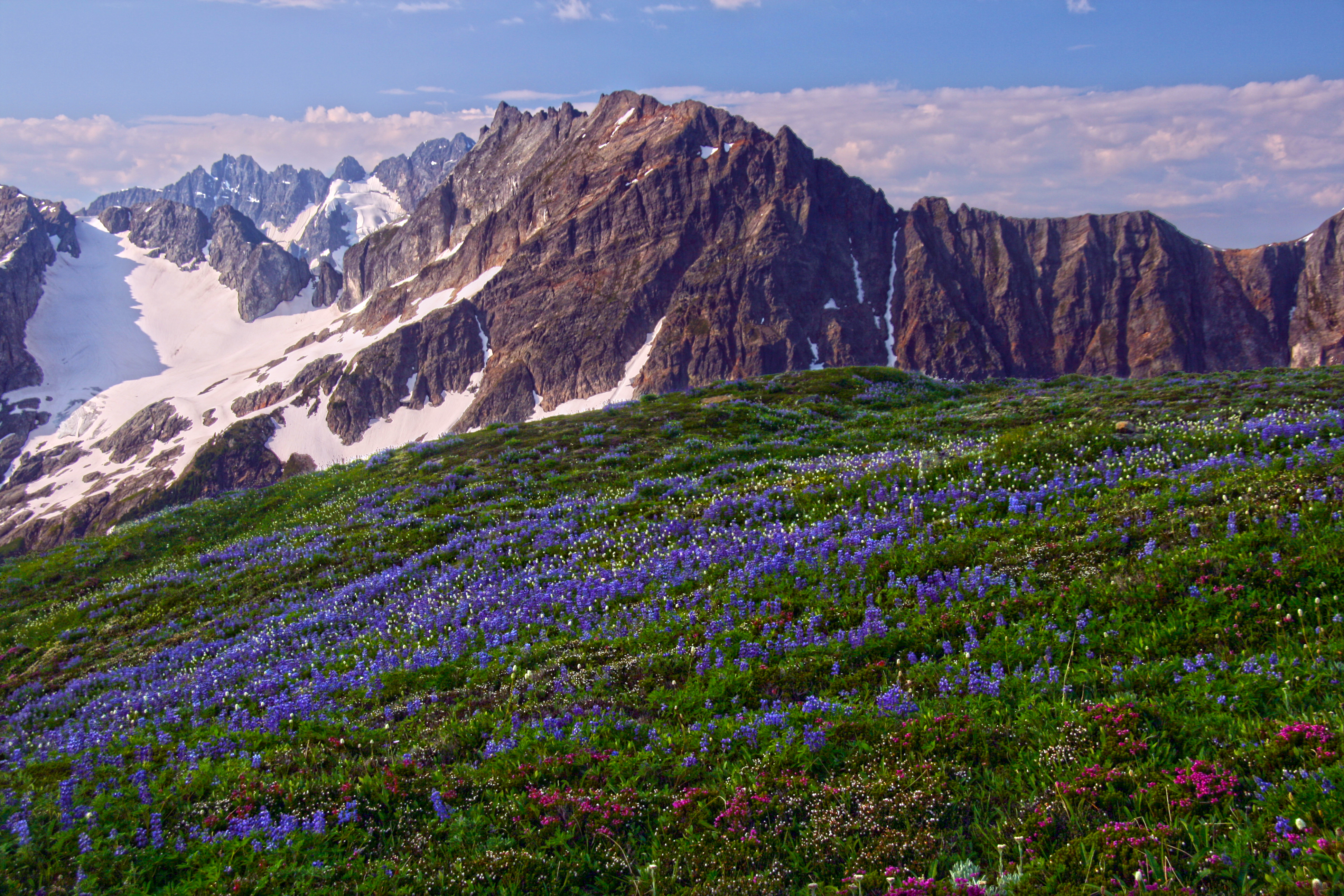 Wildflowers on Sahale Arm North Cascades National Park North 3888x2592