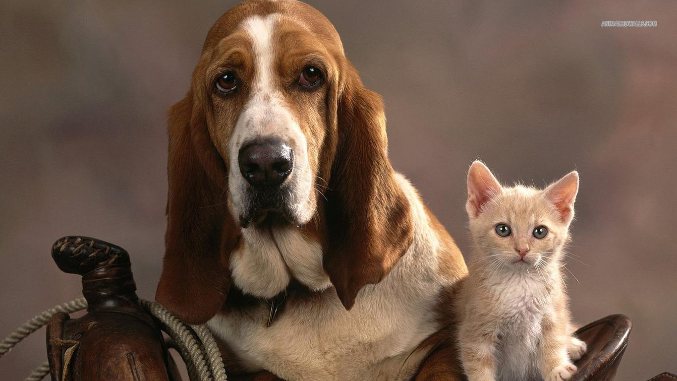 Best 51 Hound Background on HipWallpaper Hellhound Wallpaper 1366x768