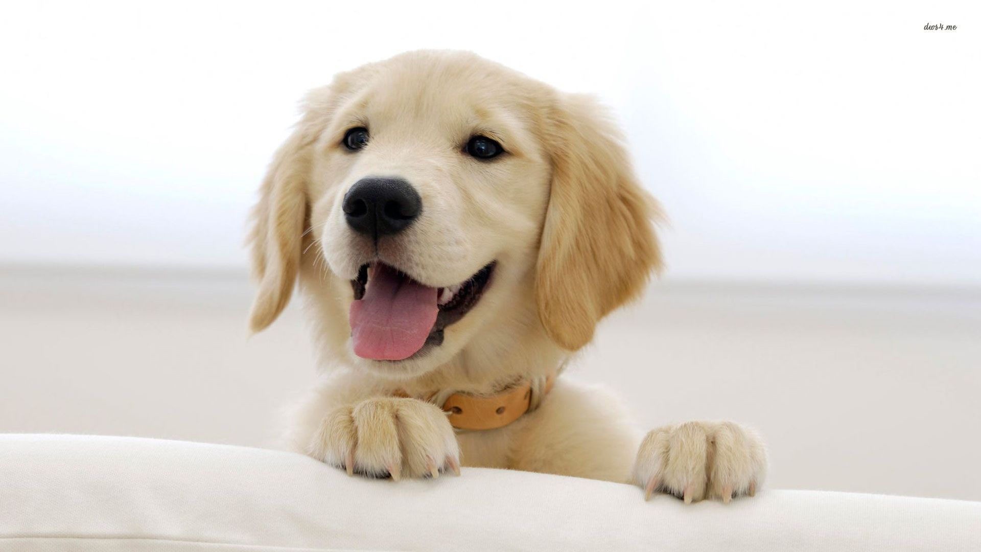 Wallpaper Cute Dogs Puppies