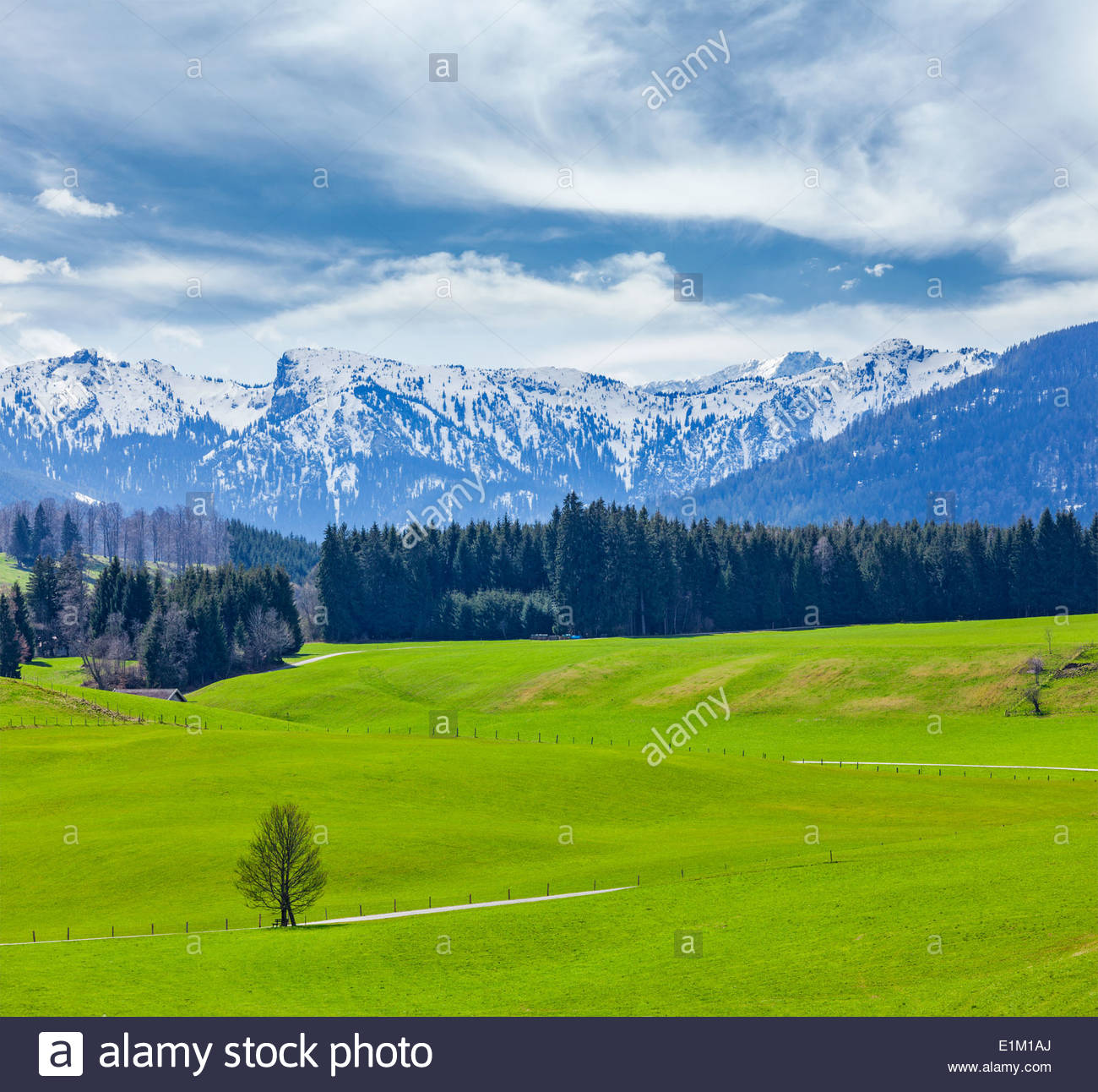 German idyllic pastoral countryside in spring with Alps in Stock 1300x1292