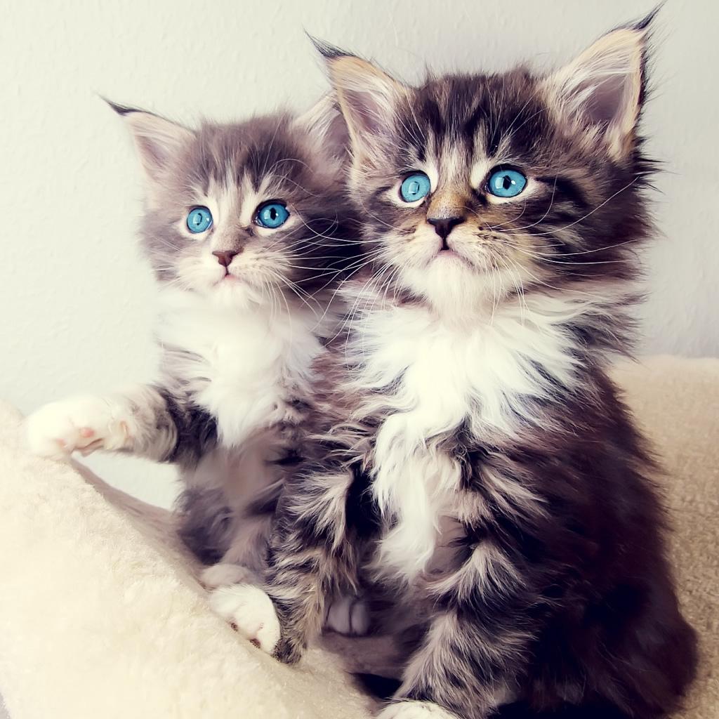 Cute cat wallpaper for ipad wallpapersafari - Kitten wallpaper for ipad ...
