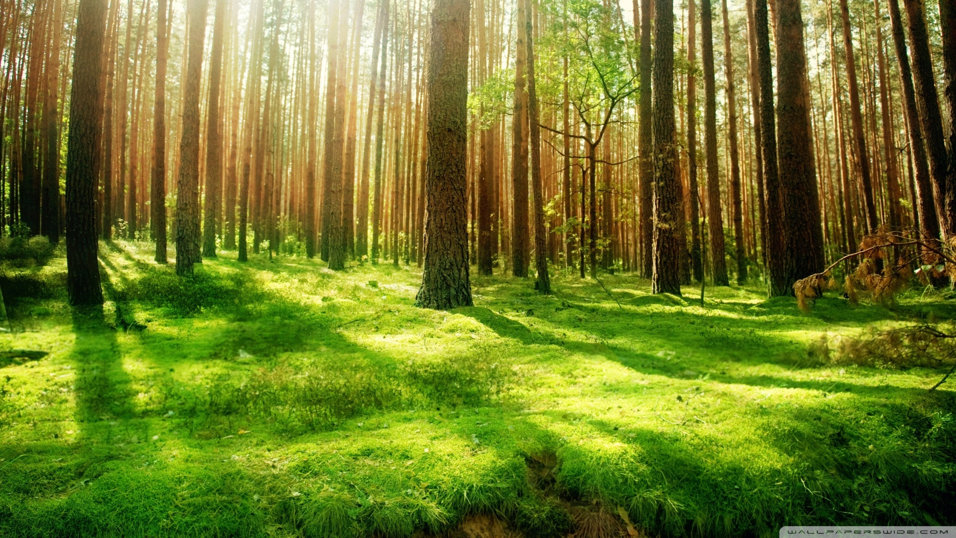 Beautiful Forest Scenery Wallpaper 1920x1080 Beautiful Forest 1920x1080