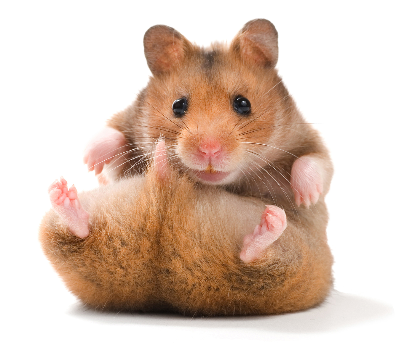 Firefighter Performs Life Saving CPR on a Hamster Kindness Blog 1400x1200