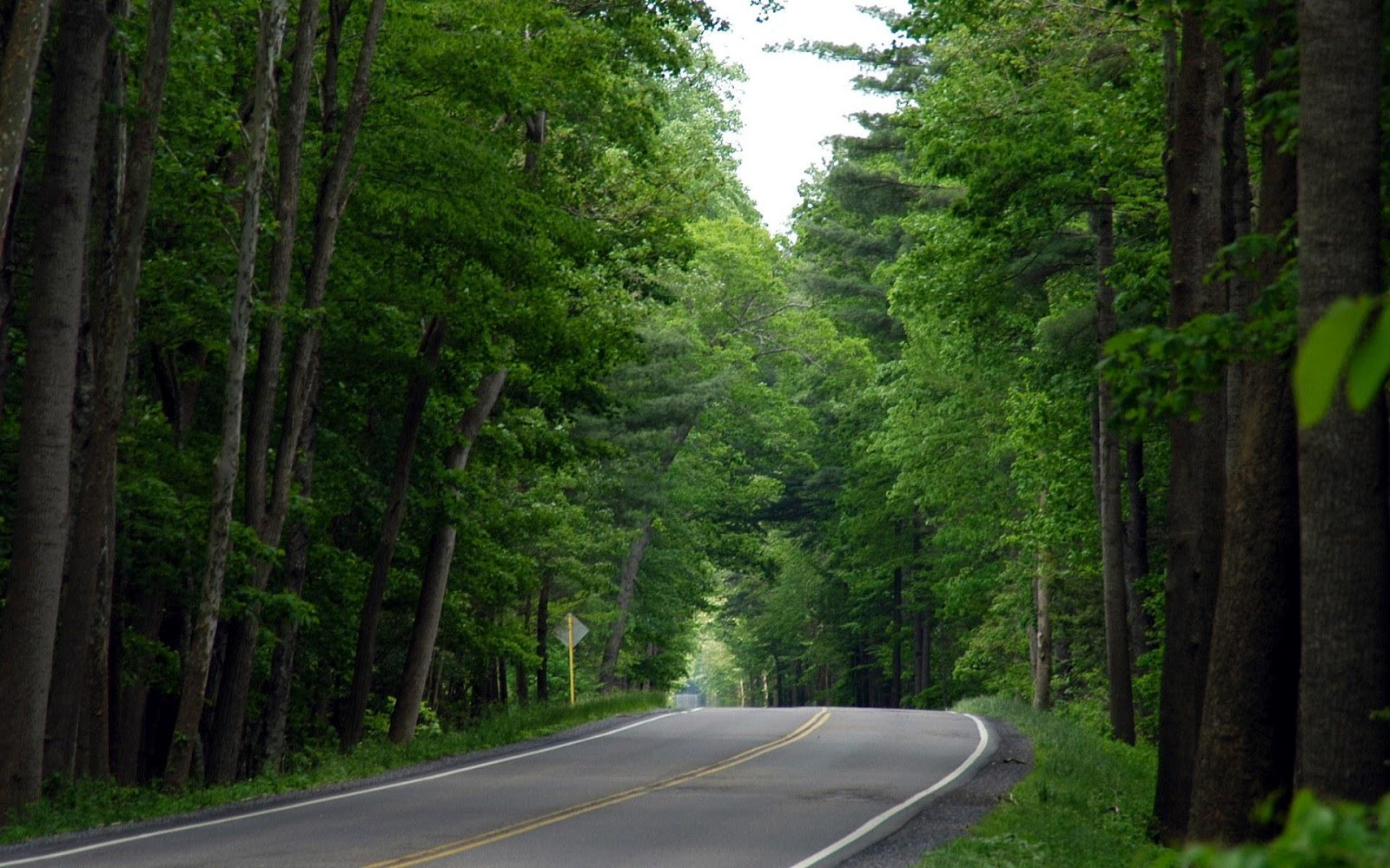 Jungle Road Nature Wallpapers HD Widescreen Full Size 1600x1000